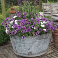 Using Troughs in the Garden