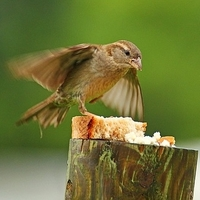 Is it Really Safe to Feed Bread to Birds?
