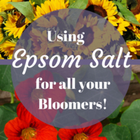 Use Epsom Salt for Bigger Better Blooms!