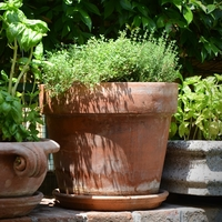 Cleaning and Sanitizing your Terracotta Pots and Planters