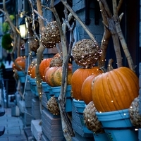Grow Your Own Pumpkins for your Fall Decor!