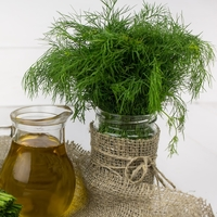 All About Growing Dill