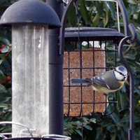 Cleaning and Sanitizing your Bird Feeders